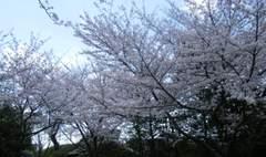 2010_04030016